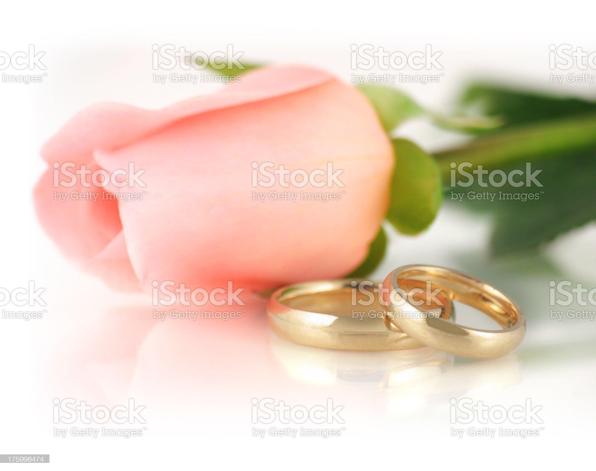 Pink Rose & Wedding Bands royalty-free stock photo