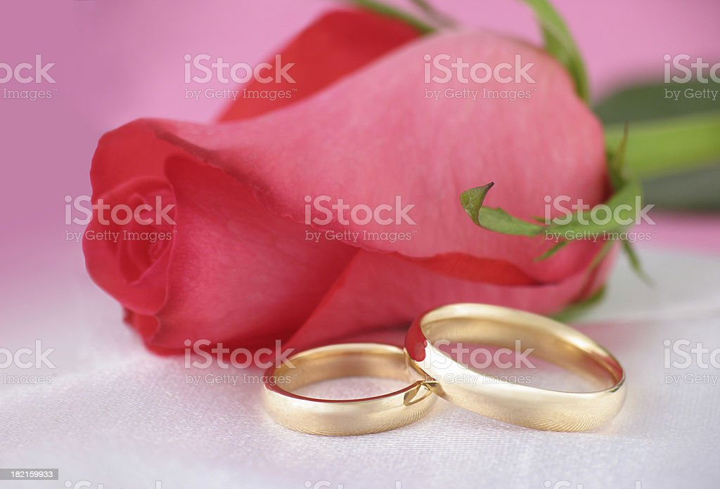 Pink Rose & Wedding Bands royalty-free stock photo