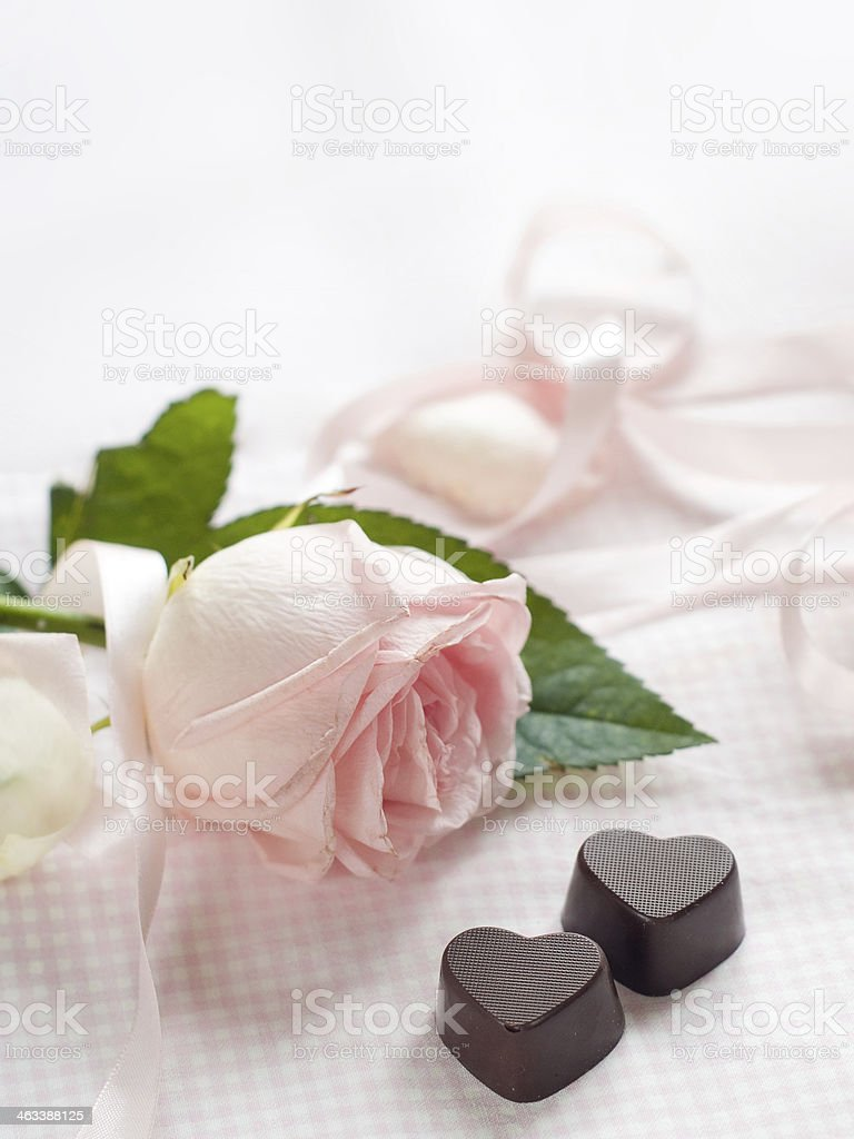 Pink rose with chocolate candy stock photo