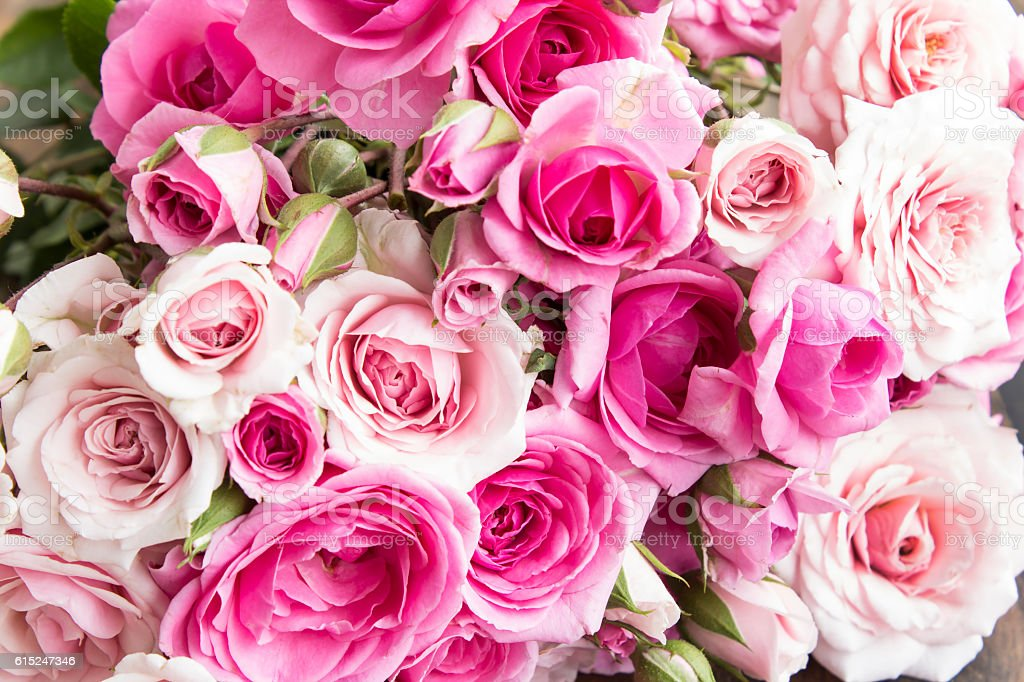 Pink Roses as a Background stock photo