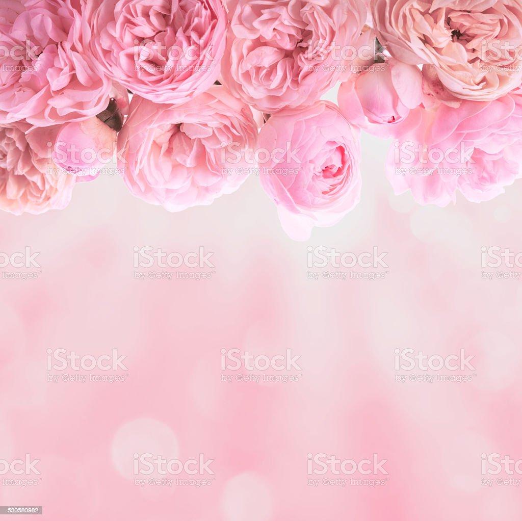 Pink roses border stock photo