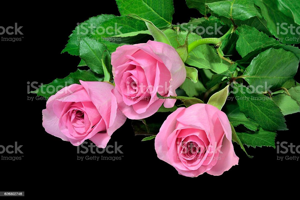 Pink roses bouquet on a black background. stock photo