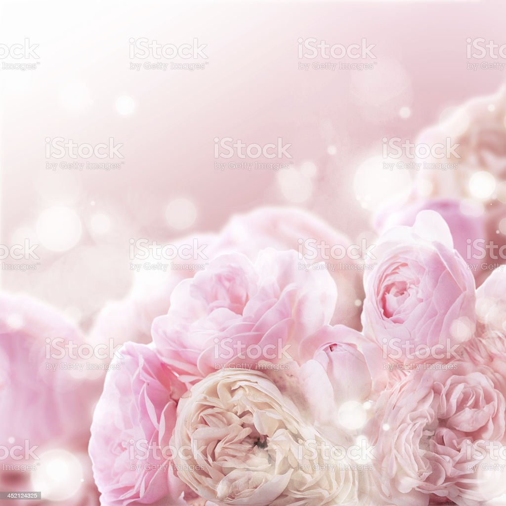 Pink roses bunch stock photo