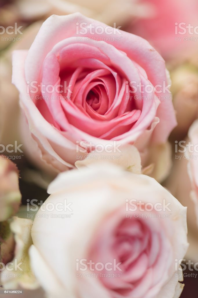 Pink roses. Detail of wedding bouquet stock photo