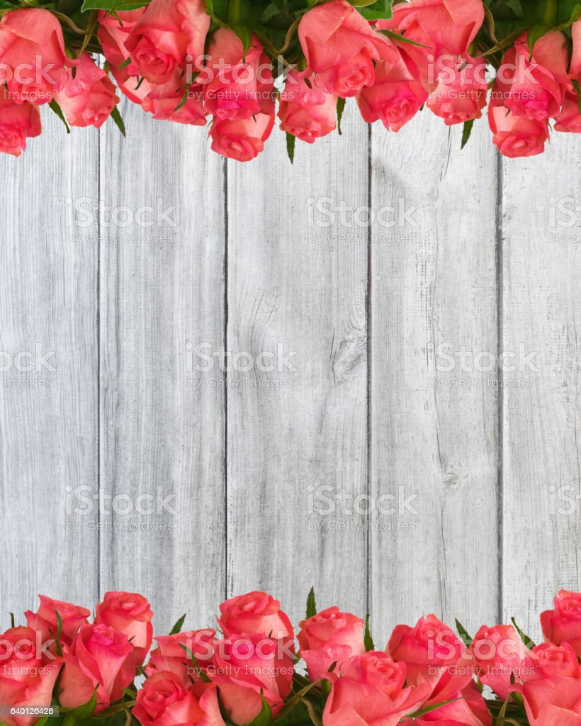 pink roses four-fifths on planks stock photo