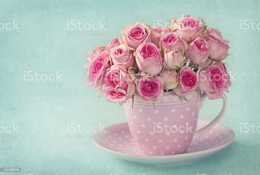 Pink roses in a pale pink polka dot teacup and saucer royalty-free stock photo