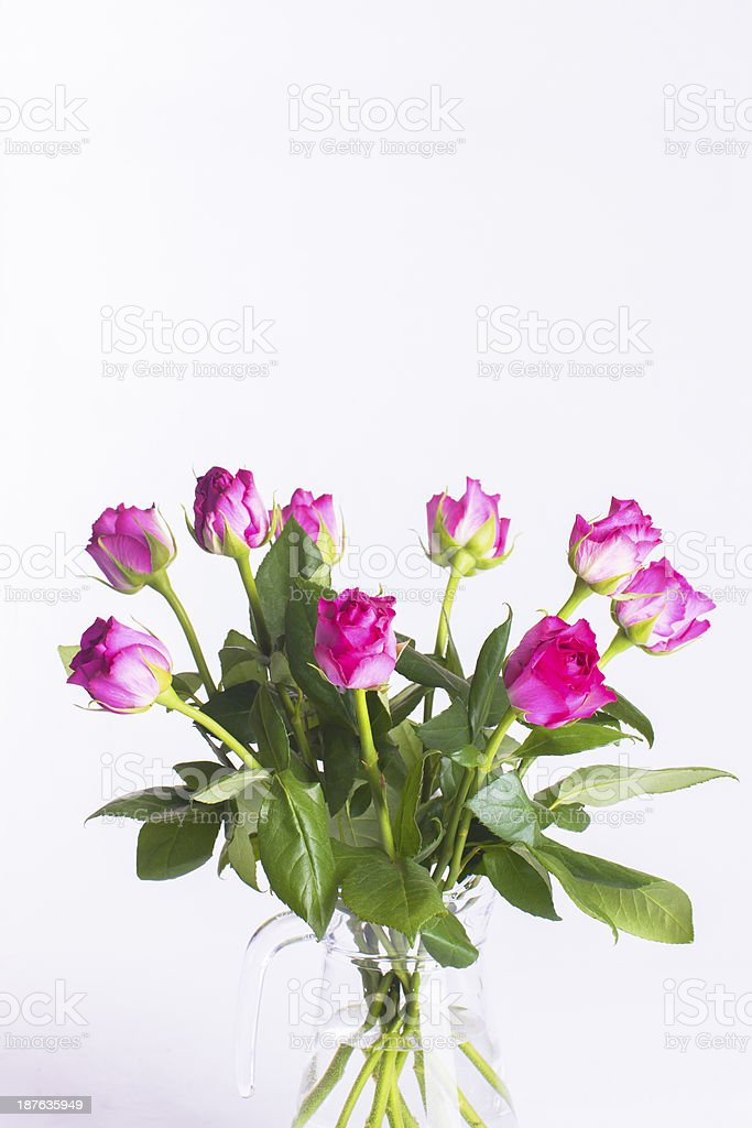 Pink roses in glass jug on white background royalty-free stock photo
