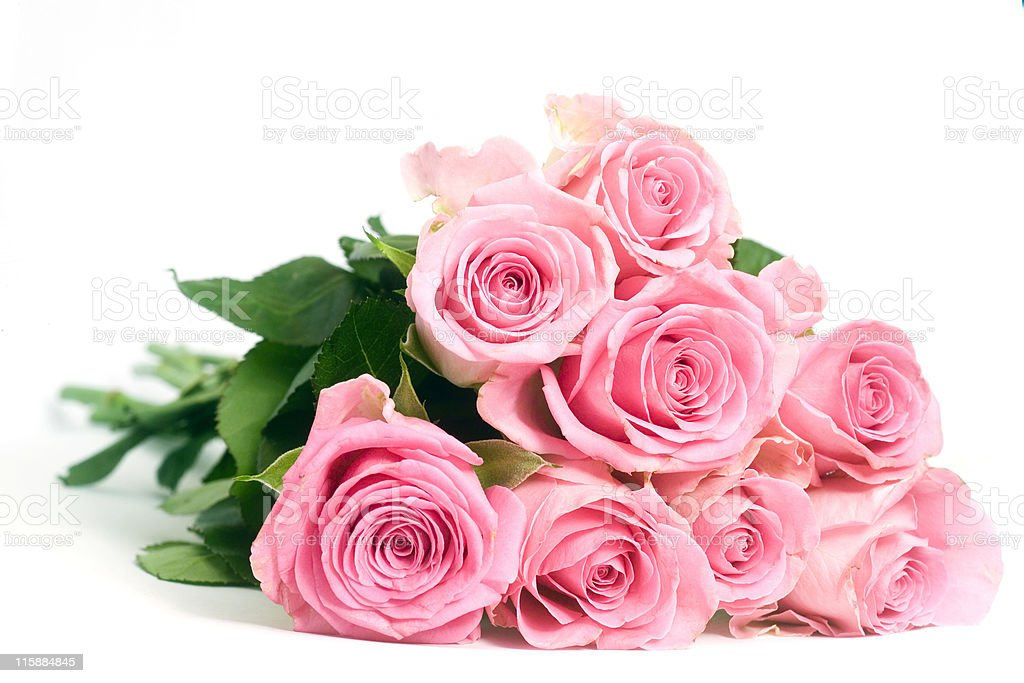 Pink Roses isolated on a white background stock photo