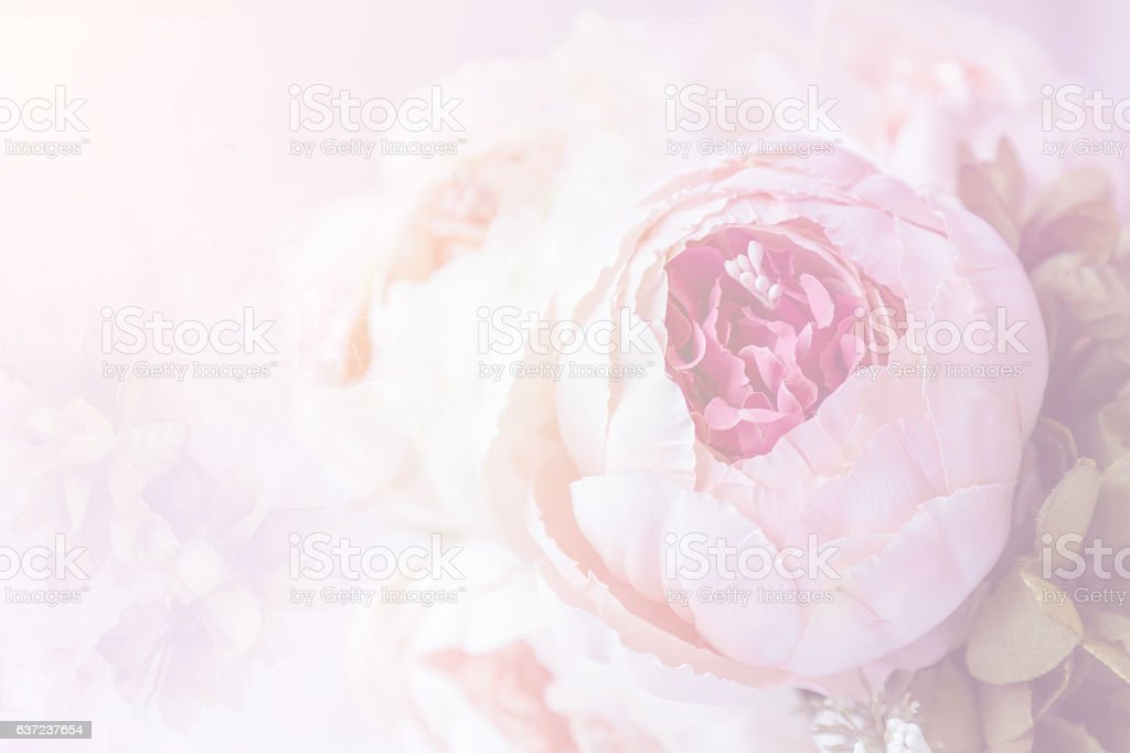 Pink roses on pink background. stock photo