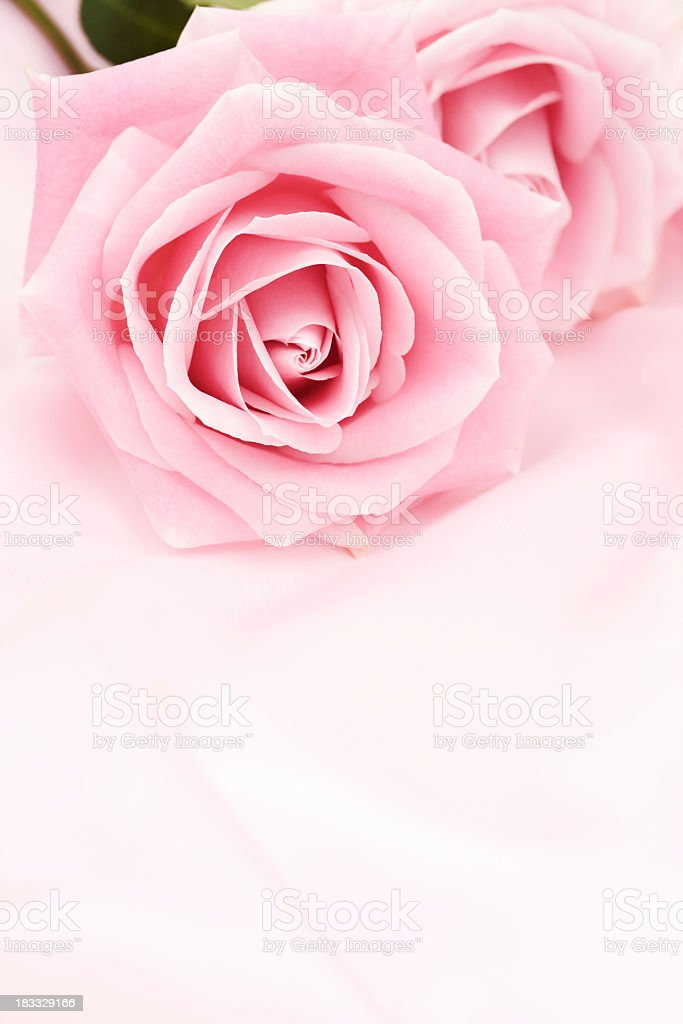 Pink roses on pink silk background royalty-free stock photo