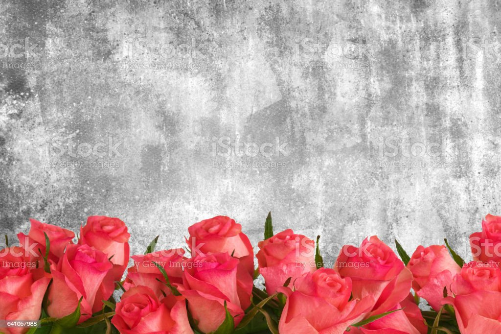 Pink roses on the wall. stock photo