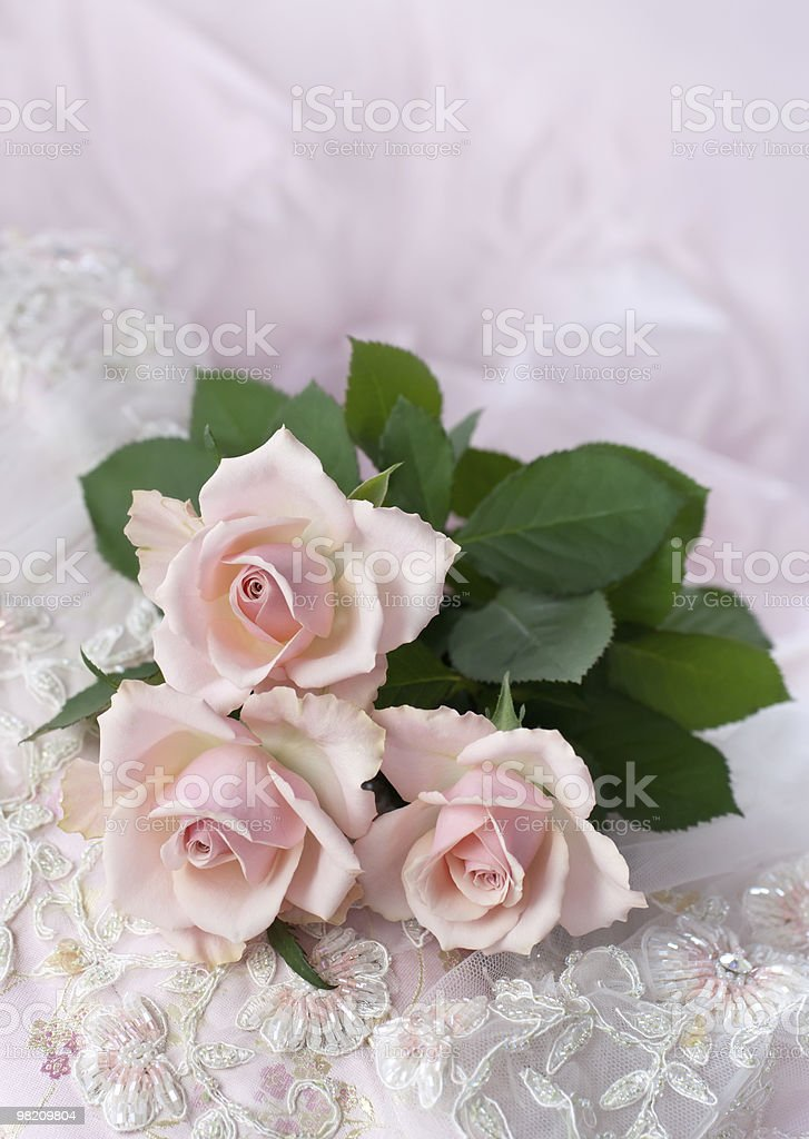 Pink roses on wedding lace (copy space) royalty-free stock photo