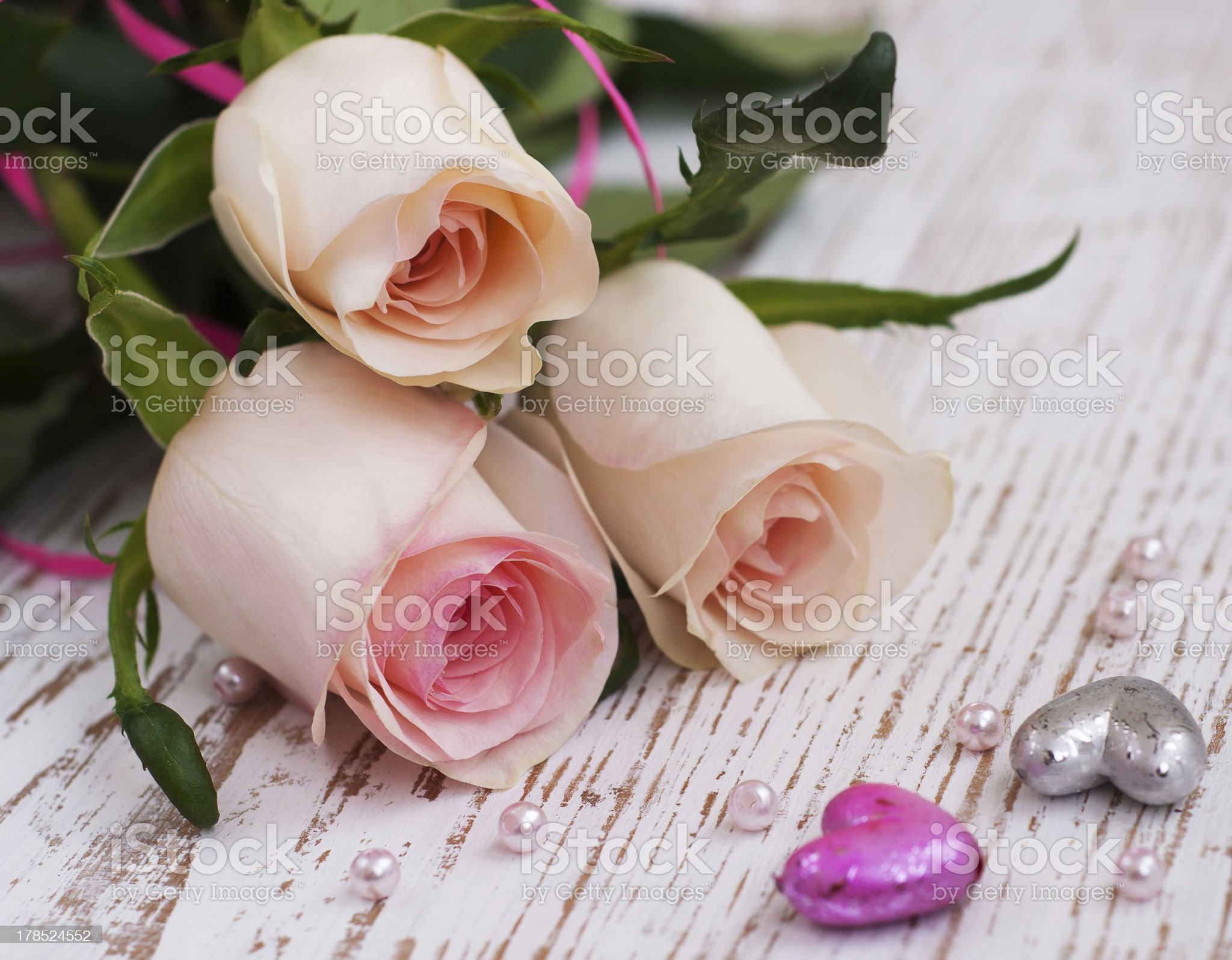 Pink Roses royalty-free stock photo