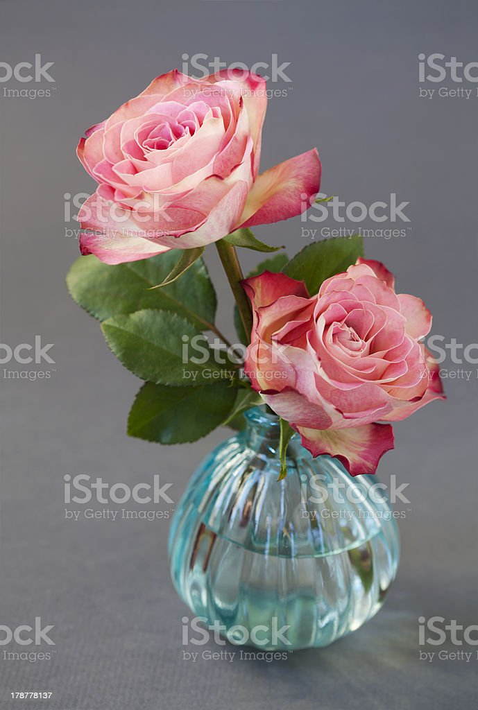 Rosas cor-de-rosa foto royalty-free