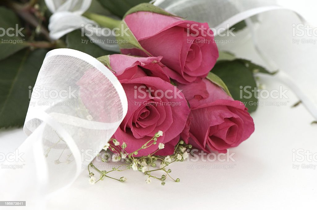 Pink Roses with Ribbon. royalty-free stock photo