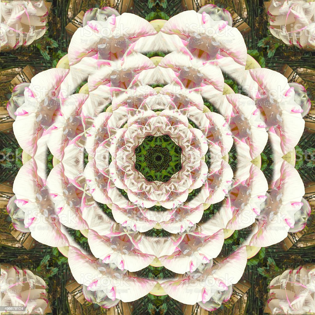 Pink Sacred Lotus Flower in Bloom Kaleidoscopic Photographic Mandala Design stock photo