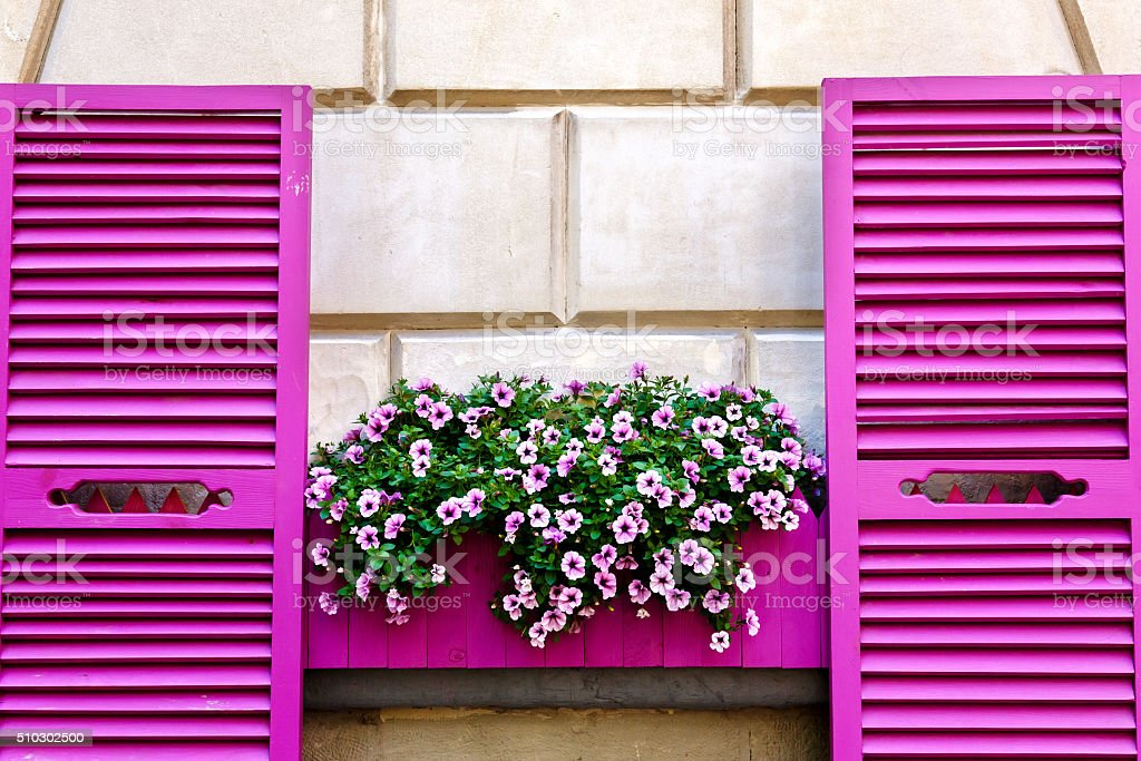 Pink shutters and petunia flowers on a wall stock photo