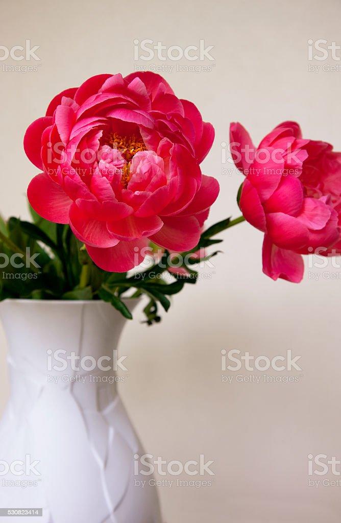 Pink spring peonies in white vase stock photo