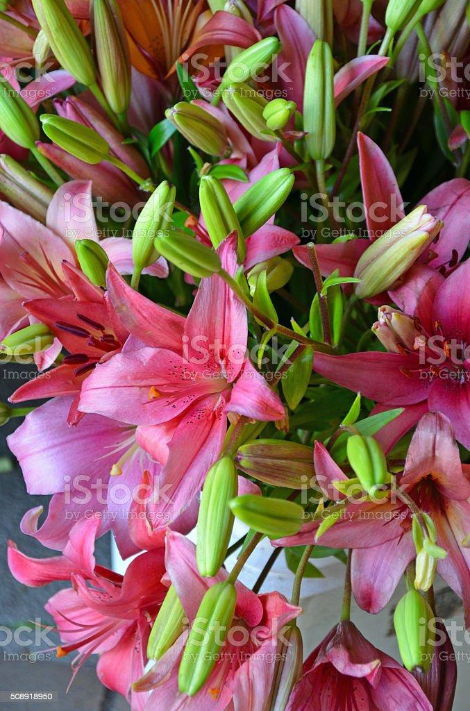 Pink stargazer lilies stock photo