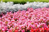 Pink summer flower fields. Floral blur background