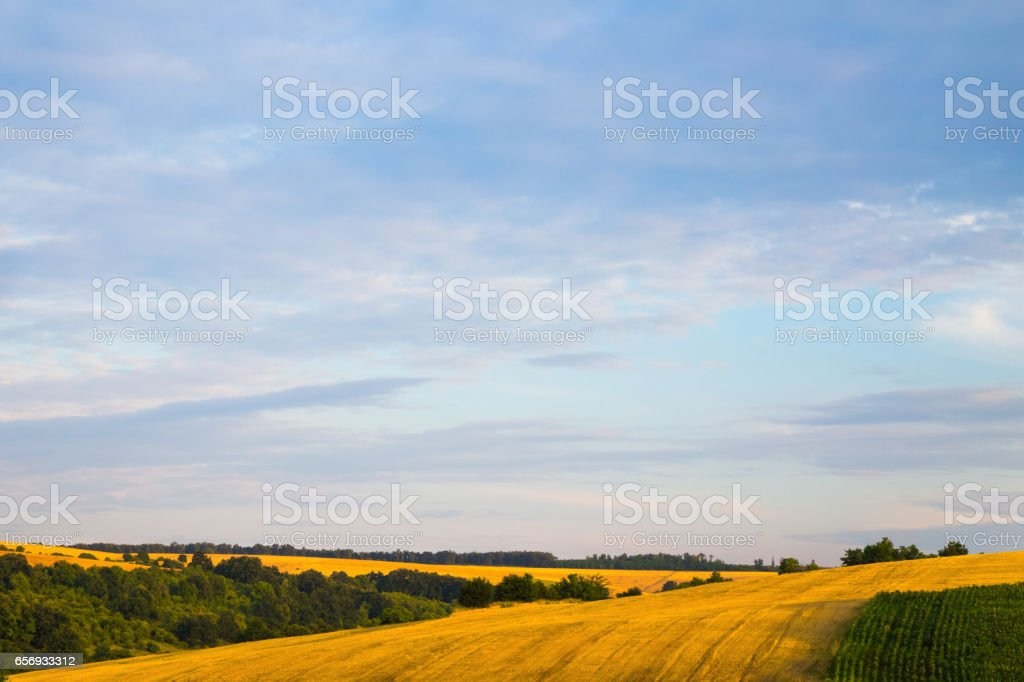 Pink sunrise or sunset over wheat or barley fields stock photo