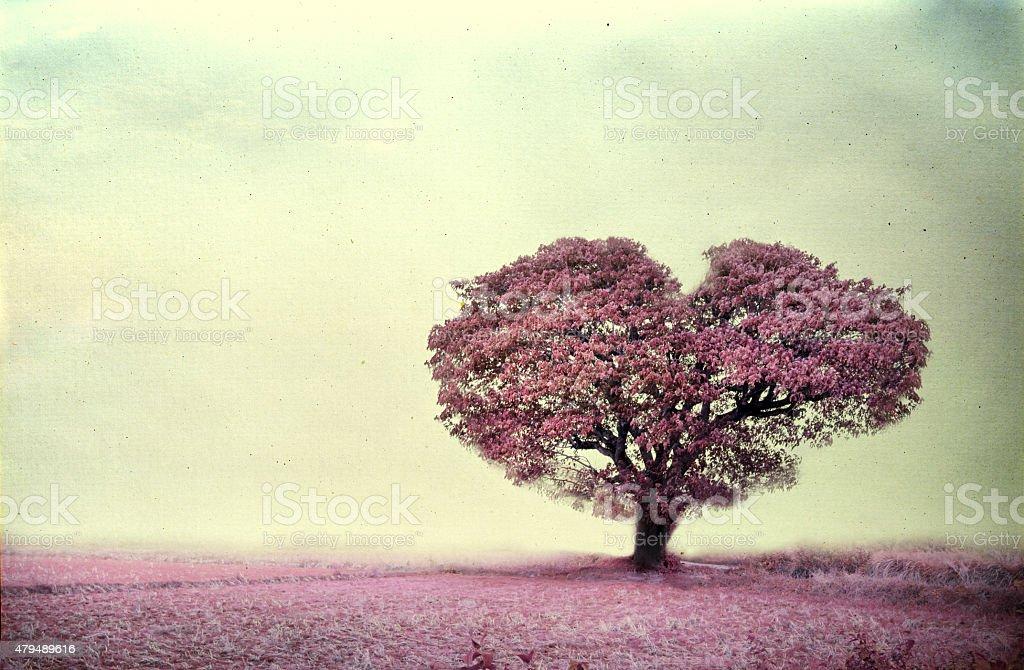 pink tree heart shape stock photo