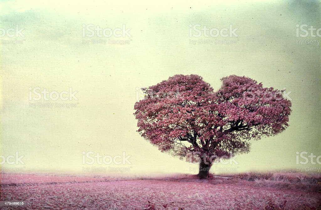 pink tree heart shape stock photo