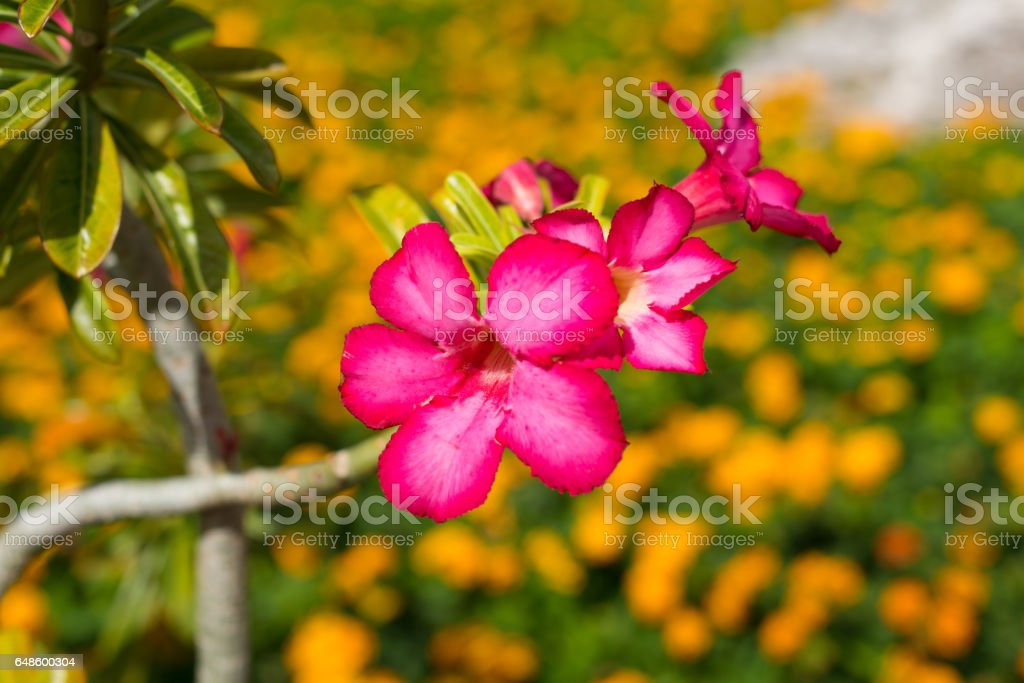 Pink tropical exotic flowers stock photo