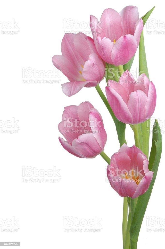 Pink Tulip arrangement stock photo