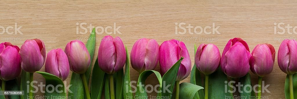 Pink tulip banner stock photo
