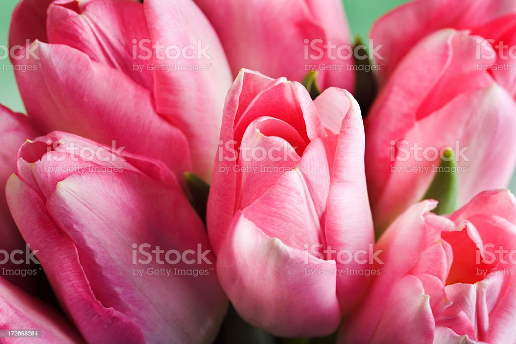 Pink Tulip Bouquet Arrangement of Fresh Cut Blooming Flowers Bunch royalty-free stock photo