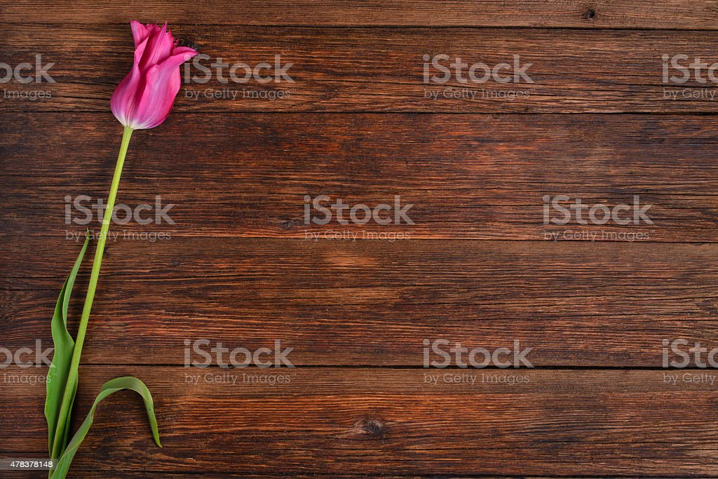 Pink tulip flower on wooden table background with copy space. stock photo