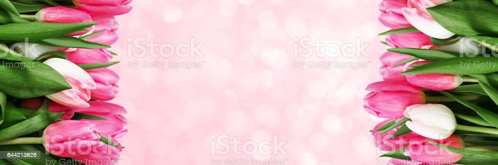 Pink tulip flowers background stock photo