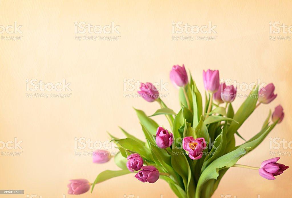 Pink tulip flowers bouquet stock photo