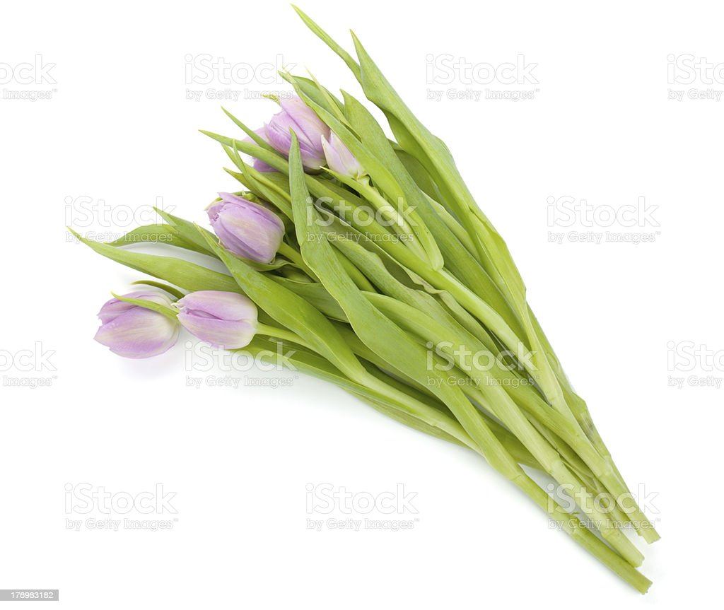 Pink tulips bouquet stock photo