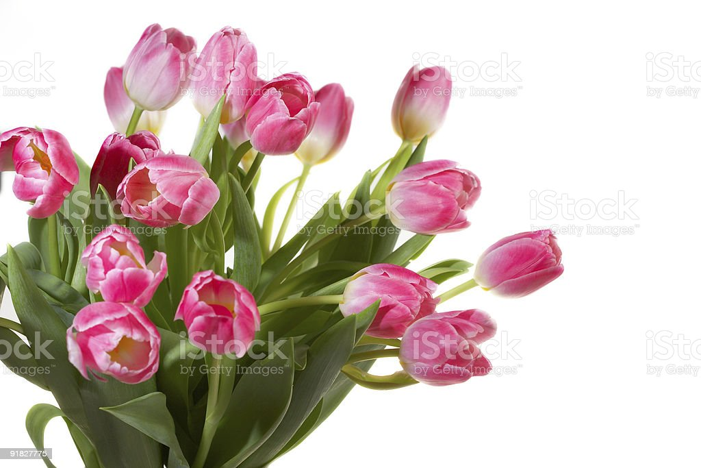 Pink Tulips bouquet royalty-free stock photo