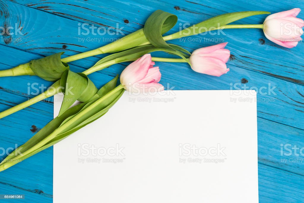 pink tulips on a blue wooden board stock photo