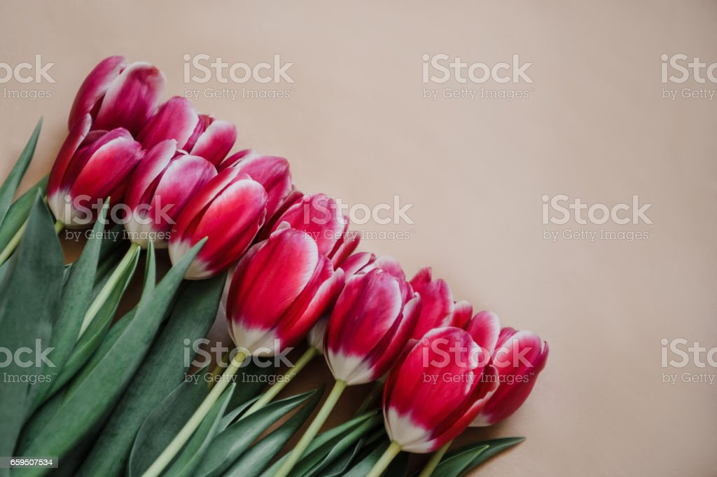 Pink tulips on kraft paper on a beige background stock photo