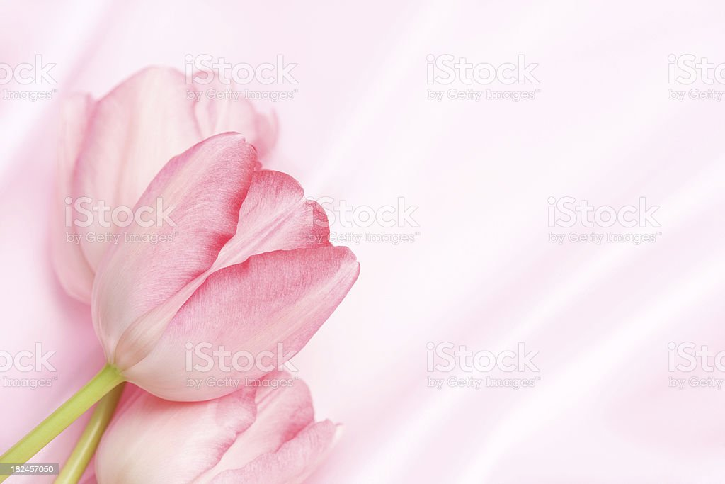 Pink Tulips On Satin royalty-free stock photo