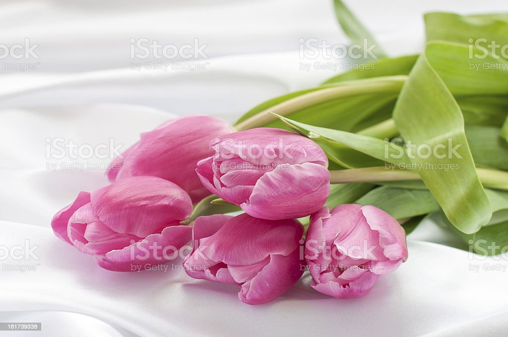 Pink tulips on white silk royalty-free stock photo