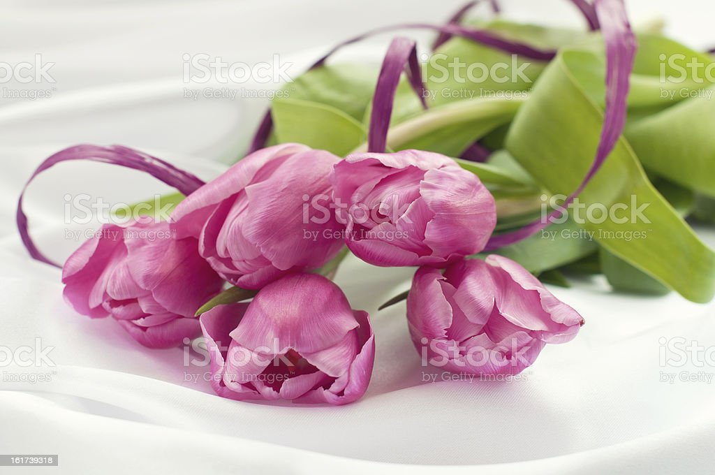 Pink tulips on white silk with ribbon royalty-free stock photo