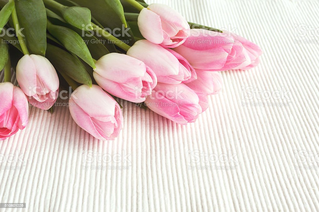 Pink tulips on white tablecloth. Toned, soft focus stock photo