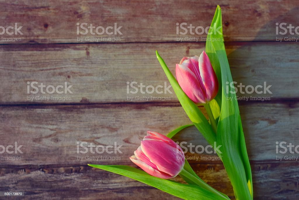 Pink tulips on wooden background stock photo