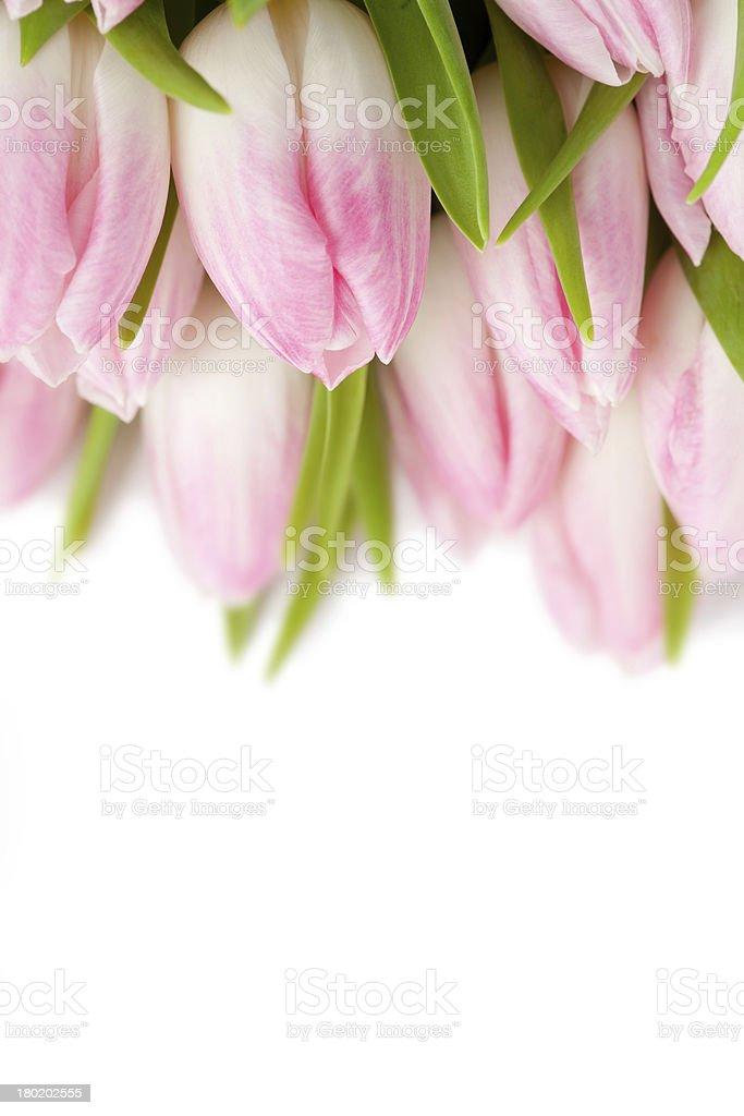 Tulipas cor de rosa foto royalty-free