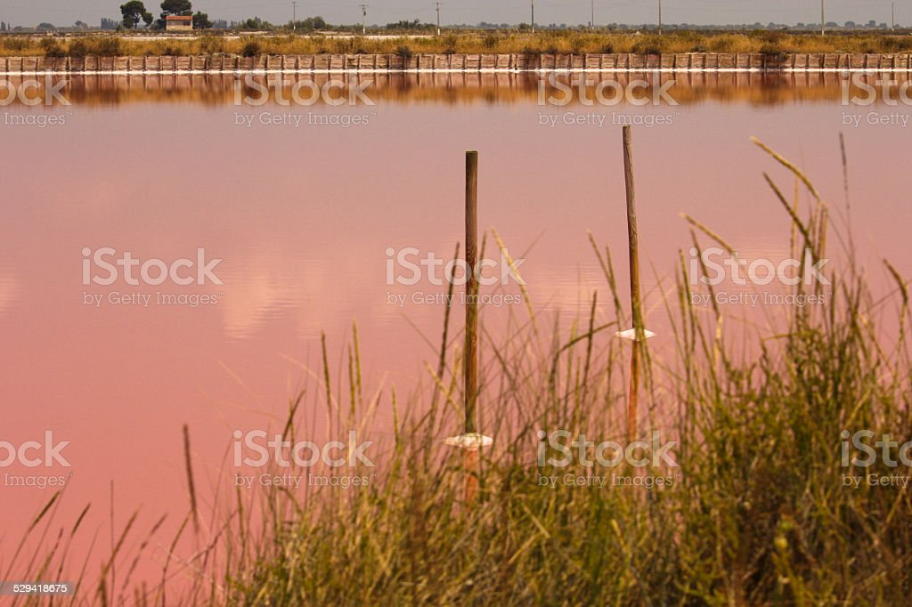 Pink water in the salt basin of Aigues mortes stock photo