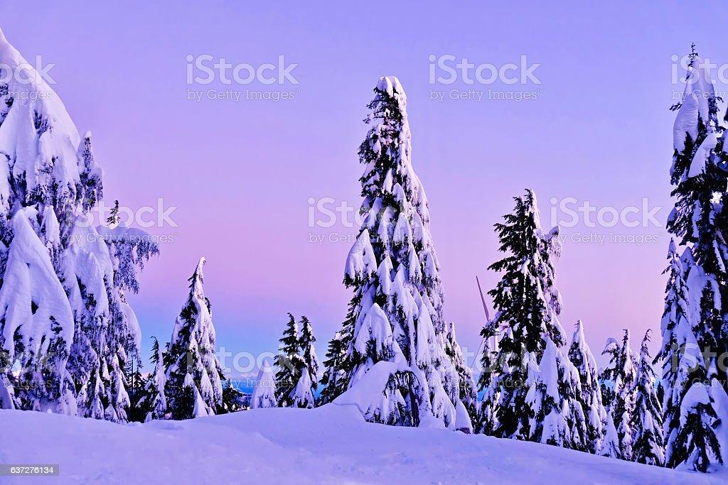 Pink winter sunrise. stock photo
