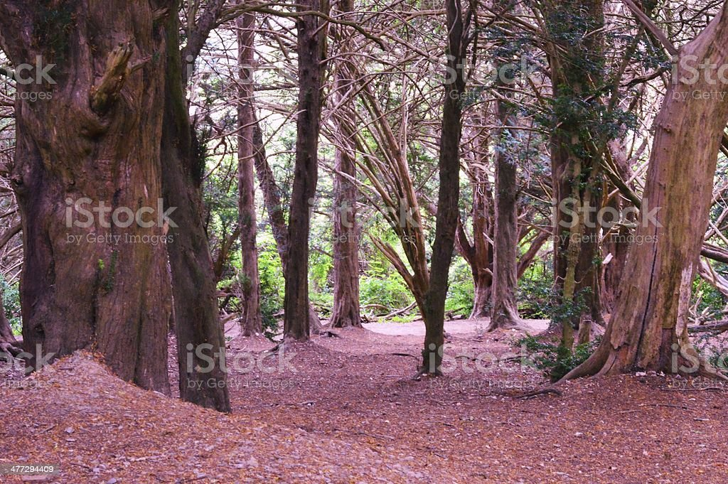 Pink woods stock photo