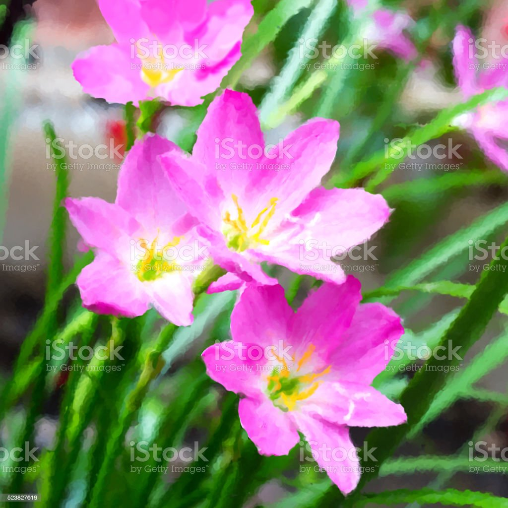 Pink zephyranthes flowers. Rain Lily stock photo