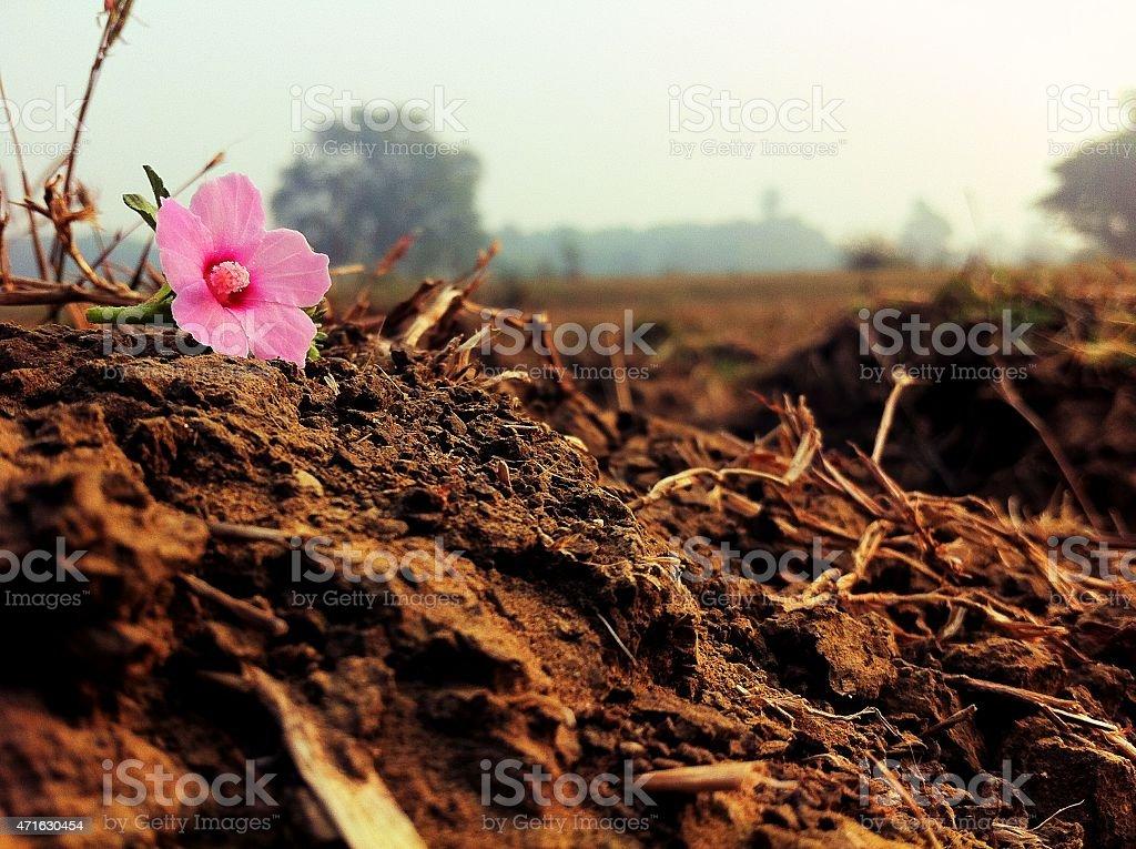 pink_flower on ground stock photo