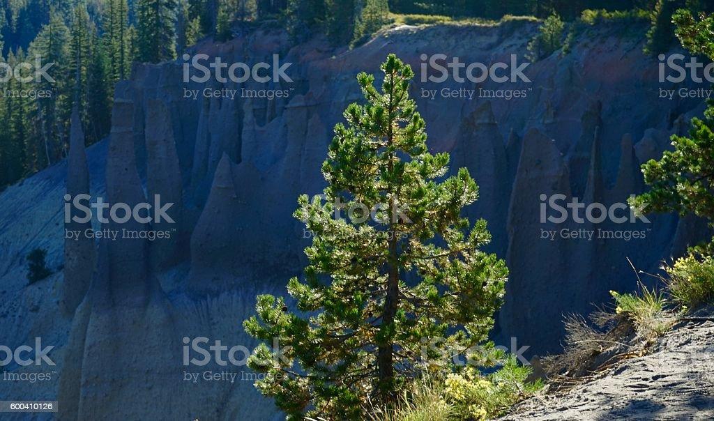 Pinnacles Pine Shine stock photo